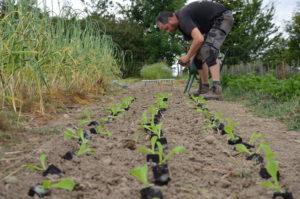 On plante des salades