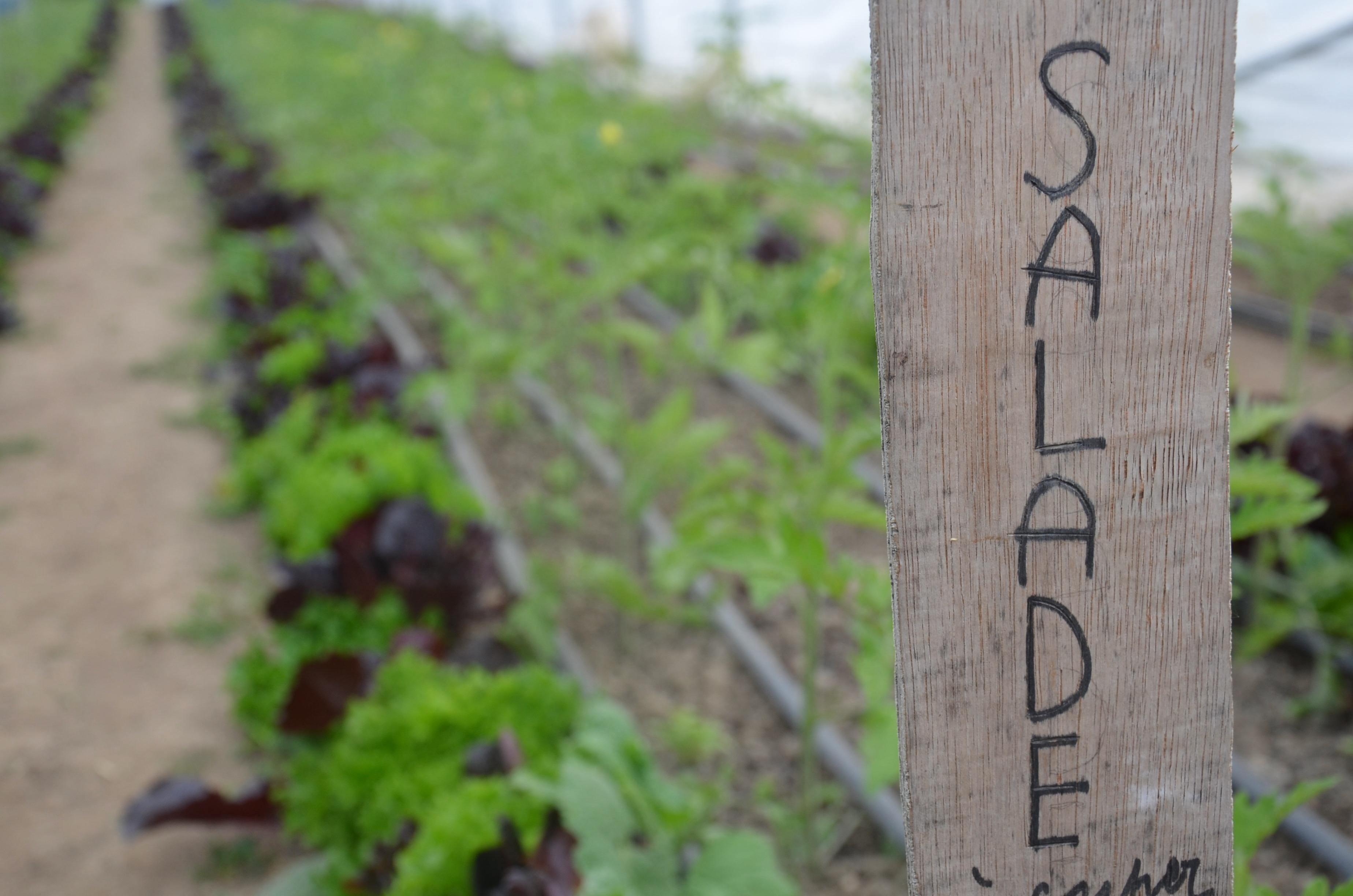 salade à couper